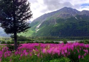 Location- Seward Alaska Home Staging