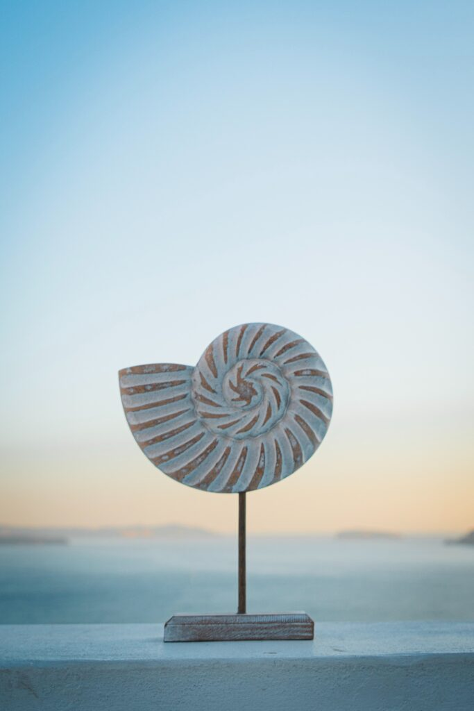 Spriral Shell Photo by Roan Lavery on Unsplash.