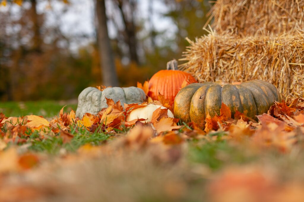 Three Reasons to Change Your Decor in the Fall. Photo by Joseph Gonzalez on Unsplash