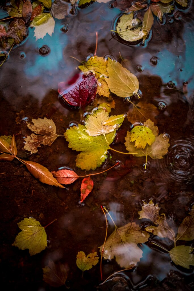 Three Reasons to Change Your Decor in the Fall. Photo by Omid Armin on Unsplash.